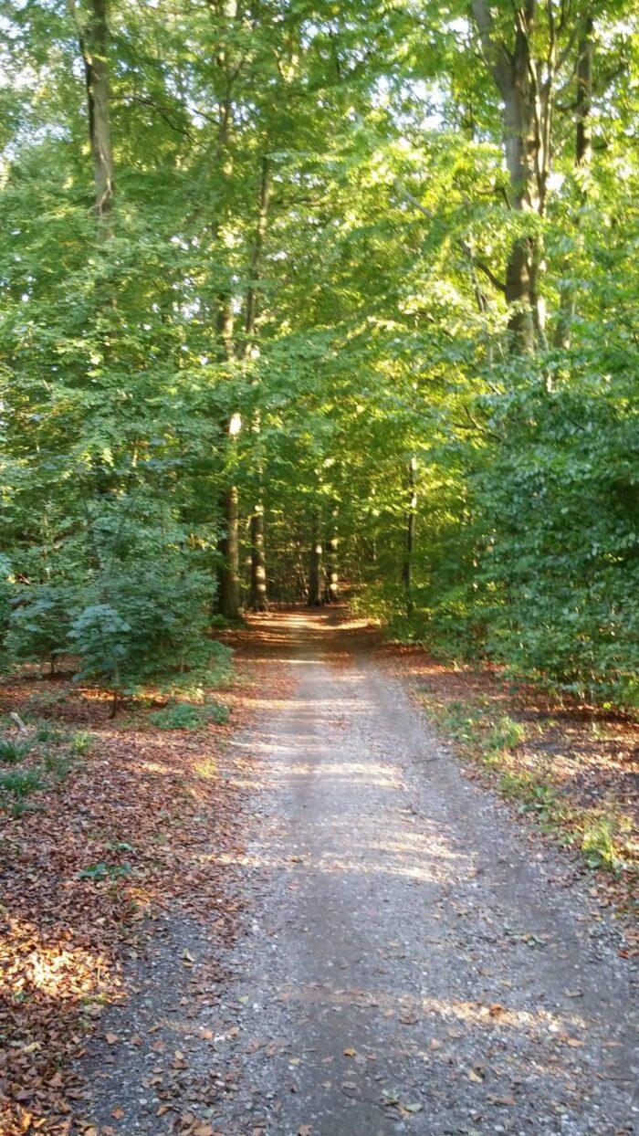 skov i dk